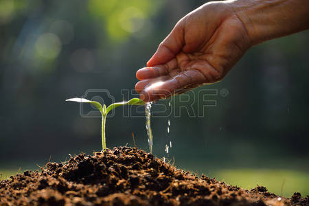 35478832-farmer-hand-watering-a-young-plant.jpg